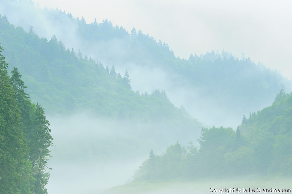 Acadian Forest and marsh in fog<br /> Fundy National Park<br /> New Brunswick<br /> Canada