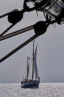 France, Manche (50), Granville, croisière à bord du Lys Noir, vieux gréement de 1914, le Charles Marie // France, Normandy, Manche department, Chausey isands, cruise on the sailboat the Lys Noir