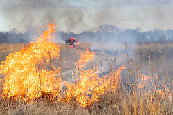 Fire trucks and firefighters managing a controlled burn on the Daphne Prairie, a remnant of the Blackland Prairie, Mount Vernon, Texas, USA.