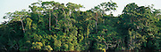ECUADOR, ORIENTE, AMAZON RIVER BASIN Napo River (Amazon tributary) down river from Coca, panorama of primary, uncut jungle rainforest