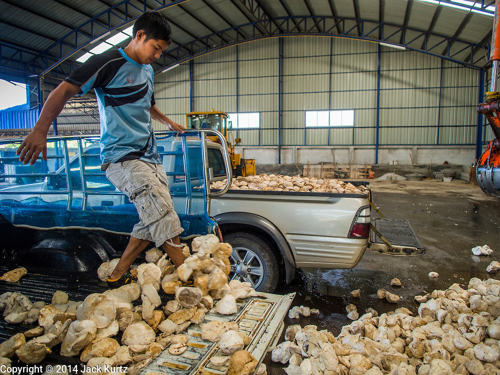 """15 DECEMBER 2014 - CHUM SAENG, RAYONG, THAILAND: A farmer kicks raw latex out of the back of his pickup truck at a rubber buying station in Chum Saeng, Thailand. Thailand is the second leading rubber exporter in the world. In the last two years, the price paid to rubber farmers has plunged from approximately 190 Baht per kilo (about $6.10 US) to 45 Baht per kilo (about $1.20 US). It costs about 65 Baht per kilo to produce rubber ($2.05 US). Prices have plunged 5 percent since September, when rubber was about 52Baht per kilo. Some rubber farmers have taken jobs in the construction trade or in Bangkok to provide for their families during the slump. The Thai government recently announced a """"Rubber Fund"""" to assist small farm owners but said prices won't rebound until production is cut and world demand for rubber picks up.     PHOTO BY JACK KURTZ"""