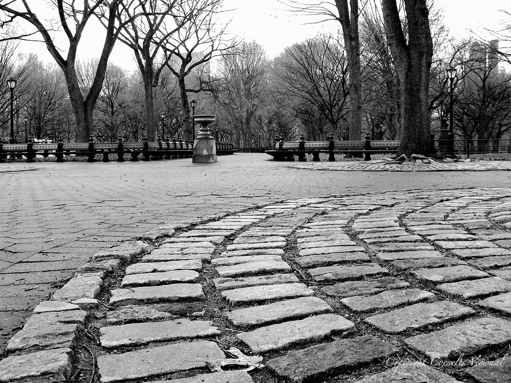 Cobble stones around a tree near the Naumberg bandshell in Central Park.
