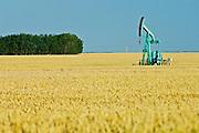 wheat field and oil pump jack<br /> Carlyle<br /> Saskatchewan<br /> Canada