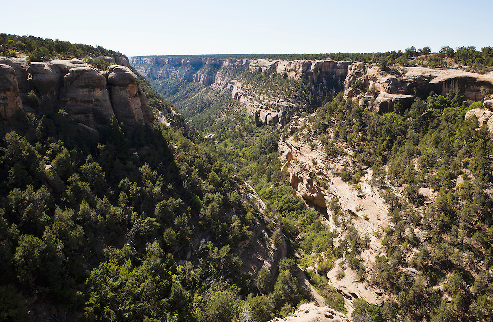 The canyon below Cliff Palace in Mesa Verde Nationsl Park, Colorado, USA.