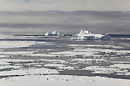 Icebergs and icefloes in the water along the coast of Peter 1 Øy, Phantom Coast, Bellingshausen Sea, West Antarctica