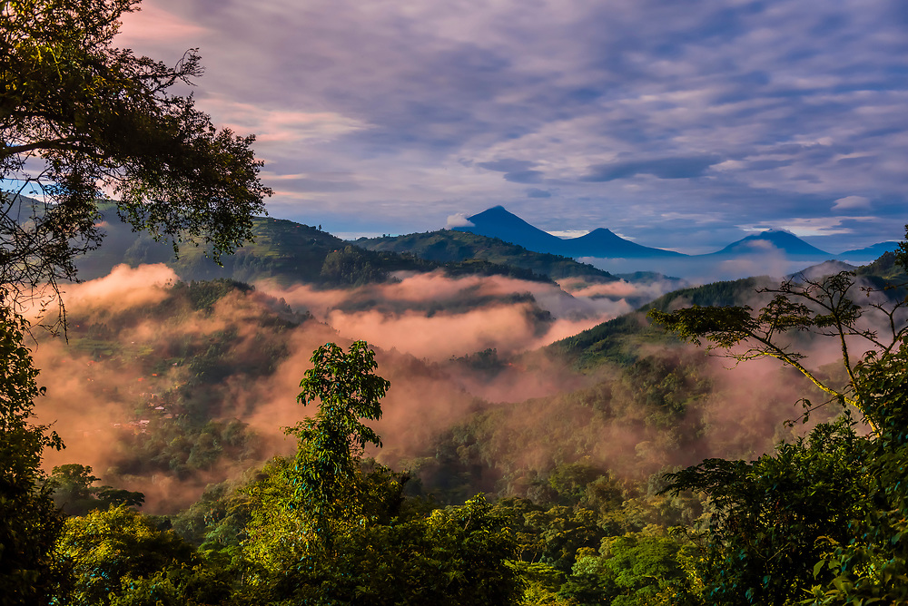 "Fog envelops Bwindi Impenetrable Forest contains 400 Mountain Gorillas, half the world's population of Mountain Gorillas. It is a World Heritage Site.<br /> ""The Bwindi Impenetrable Forest is a large primeval forest located in south-western Uganda in the Kanungu District. The forest is on the edge of the Albertine Rift, the western branch of the East African Rift, at elevations ranging from 1,160 to 2,607 metres (3,806 to 8,553 ft)."""