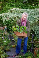 Carol Klein with box of pulmonarias ready to divide