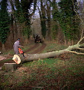 A01XDA Sequence of nine Man cutting down an ash tree in English woodland