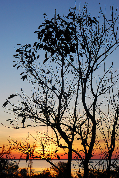 Sunset on Delaware bay through tree silhouette, there is one bird among all the leaves on the tree