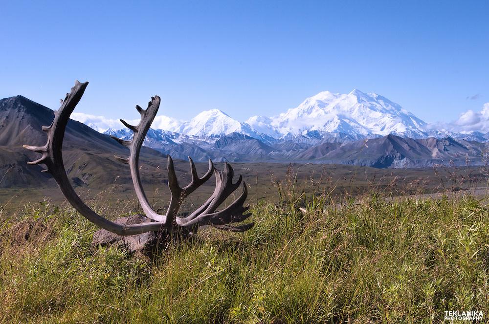 Caribou antlers and North America's tallest peak, Denali.