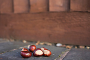 Peeled chestnuts left on a wall for the squirrels by a nature loving neigbour in Birmingham, United Kingdom.