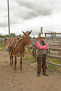 Cowboy with mule (Mulus mula) at Montana Mule Days, Montana, <br /> MODEL RELEASED