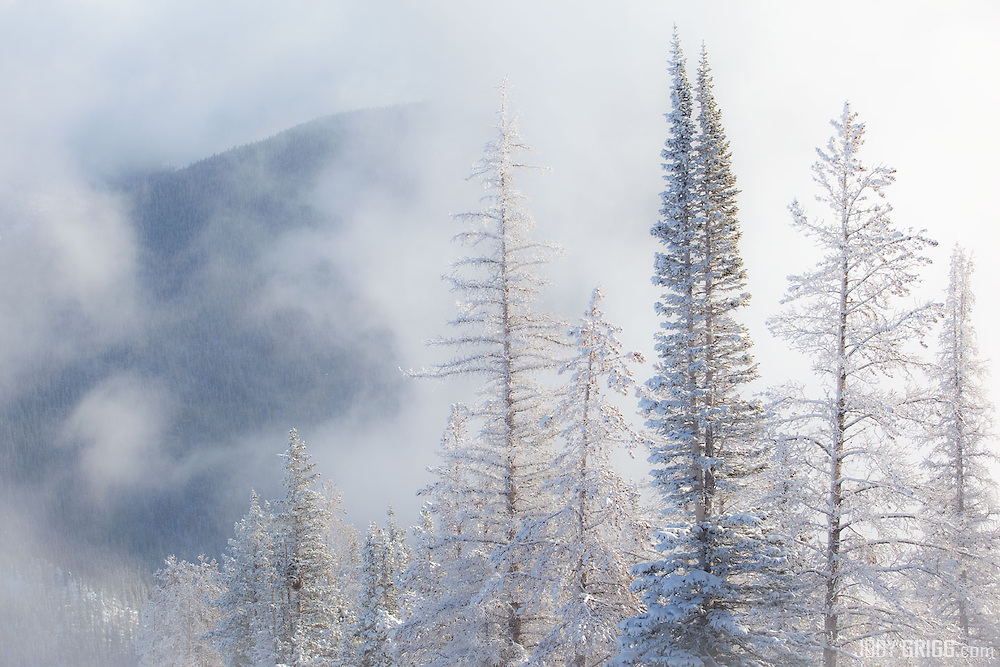 A storm begins to clear in the Arapahoe National Forest near Berthoud Pass, CO.