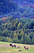 Elk, mountains, PA landscape, Elk Co., PA