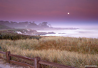 Cypress moon setting along the coast of Pacific Grove.