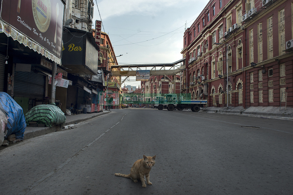 A cat sits on the deserted Hogg street in Kolkata midst the 2nd phase of lockdown in India due to covid 19 pandemic. This is to curb the spread of Covid 19 in the country. The second phase is handled with more strict rules by the administration. Kolkata, West Bengal, India, April 19, 2020. Photo by Arindam Mukherjee/ABACAPRESS.COM