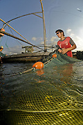 Israel, Coastal Plains, Kibbutz Maagan Michael, harvesting Carp (Cyprinidae) caught in the net before sorting