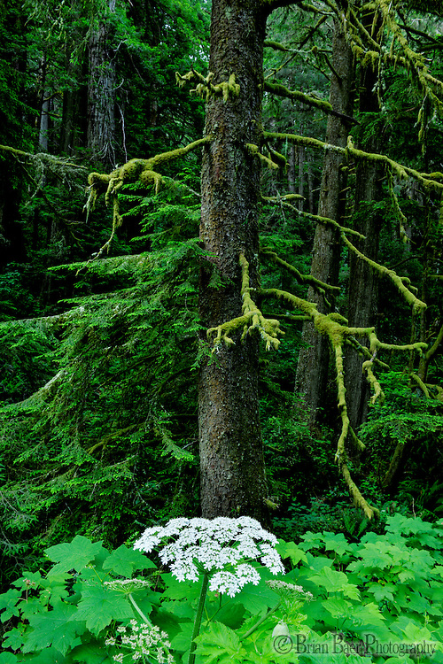 090-P89378<br /> <br /> Del Norte Coast Redwoods State Park<br /> ©2015, California State Parks<br /> Photo by Brian Baer