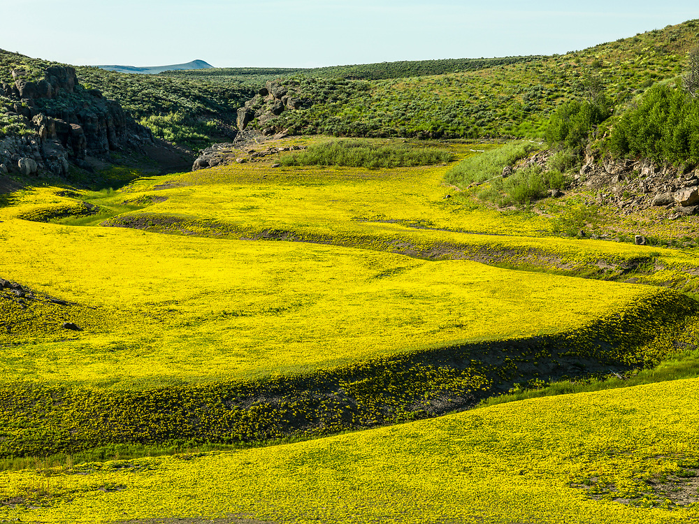 Yellow ground cover blankets the empty reservoir bed of Magic Reservoir on the Camas Prairie in Southwest Idaho.  Licensing and Open Edition Prints.