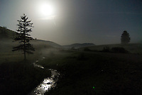 Misty meadow with fir tree (Abies)  Durmitor National Park, Montenegro