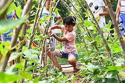 June 16, 2017 - Weifan, Weifan, China - Pupils experience farming work at a mini farm in Weifang, east China's Shandong Province. (Credit Image: © SIPA Asia via ZUMA Wire)