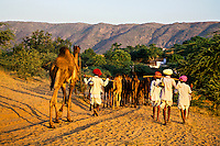 Pushkar Fair (camel fair), Pushkar, Rajasthan, India