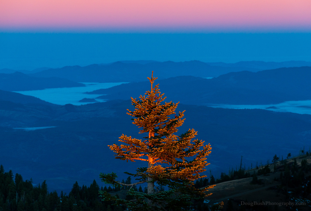 The blue shadow of the mountains, the pink line of sunshine descending from the sky to the land, the tree catching the first rays of sunrise. Hull Mountain, Mendocino National Forest.