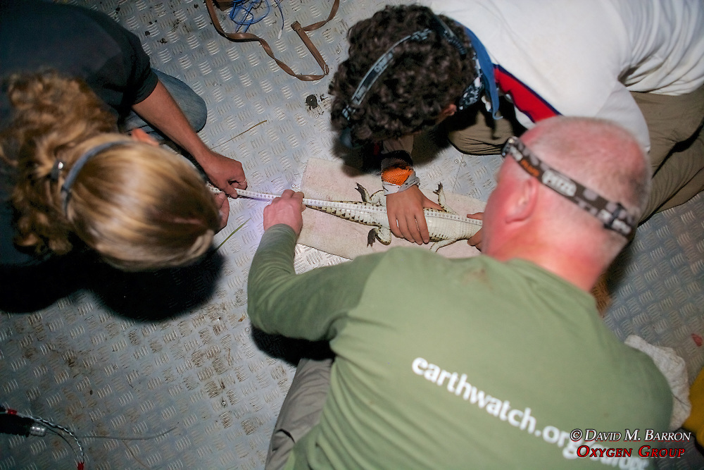 Measuring Crocodile