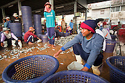 Oct. 6, 2009 -- SAMUT SAKHON, THAILAND: Burmese workers sort fish just unloaded at the port in Samut Sakhon, Thailand. The Thai fishing industry is heavily reliant on Burmese and Cambodian migrants. Burmese migrants crew many of the fishing boats that sail out of Samut Sakhon and staff many of the fish processing plants in Samut Sakhon, about 45 miles south of Bangkok. Migrants pay as much $700 (US) each to be smuggled from the Burmese border to Samut Sakhon for jobs that pay less than $5.00 (US) per day.   Photo by Jack Kurtz / ZUMA Press