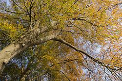 Spanderswoud, Hilversum, Noord Holland, Netherlands
