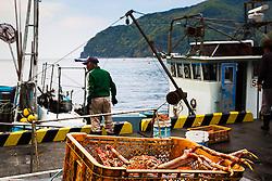 Crab harvest, fisherman, Hedo Port, Izu Peninsula, Japan