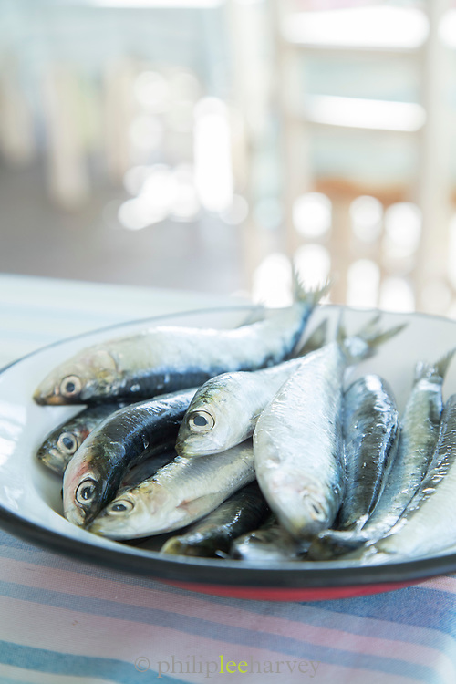 Close up of fresh anchovy fish on enamel plate, Lesbos, Greece
