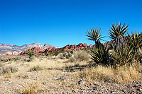 , , Red Rock Canyon , Nevada, USA   Photo: Peter Llewellyn