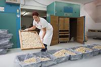 SCHWEIZ - WETZIKON - Nudelwerkstatt 'La Martina' hier eine Mitarbeiterin holt die Tortelloni aus der Trocknungsmaschine - 05. Oktober 2016 © Raphael Hünerfauth - http://huenerfauth.ch
