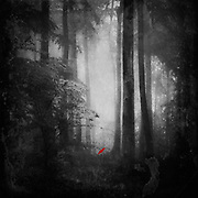 Misty and moody forest scenery with a small red bird singing
