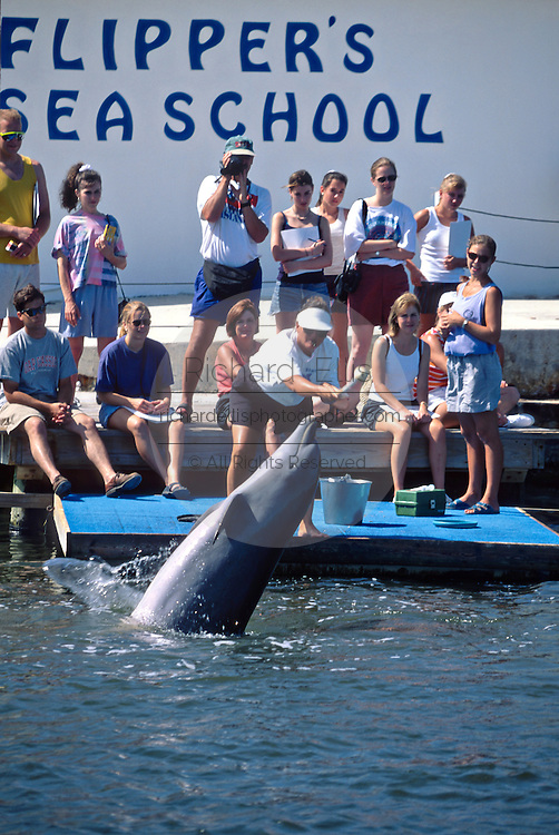 Bottle nose dolphins perform at the Dolphin Research Center  June 27, 1996 in Marathon Key, FL.  The center is where the original Flipper was trained and specializes in returning trained dolphins to the wild.