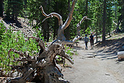 Hiking trail in Devils Postpile National Monument, Inyo National Forest, Madera County, California, USA