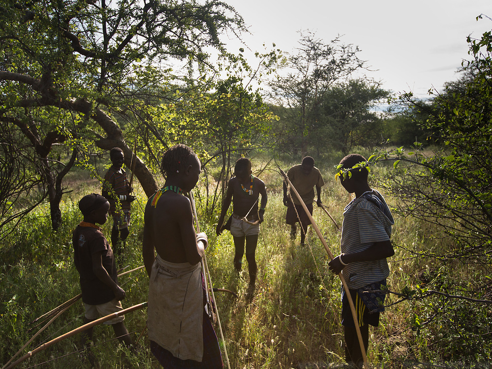 Hadza tracking an animal while on a hunt. At the Hadza camp of Dedauko.