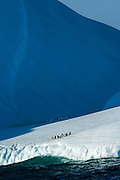 A group of Chinstrap penguins (Pygoscelis antarctica)  on an iceberg in the Scotia sea, South Atlantic Ocean..Penguins use icebergs as a social gathering place.
