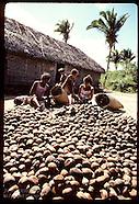 03: BABASSU PALM DOMESTIC NUT USES