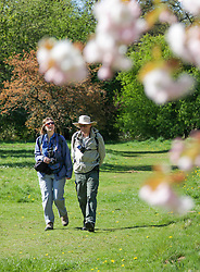© Licensed to London News Pictures. 22/04/2015. Bristol, Avon, UK. A couple enjoying the warm weather at Westonbirt, The National Arboretum today, 22nd April 2015. The south west of England is set for more warm temperatures and plenty of sunshine today. Photo credit : Rob Arnold/LNP