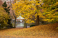 Autumn color at The Conservatory Water, a.k.a the Sailboat Pond in Central Park, Nov. 11, 2020.