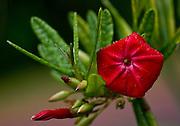 Parauapebas_PA, Brasil..Detalhe de uma flor na floresta amazonica- Floresta Nacional de Carajas, Para..Detail of a flower in the Amazon forest, National Forest of Carajas, Para ..Foto: JOAO MARCOS ROSA / NITRO