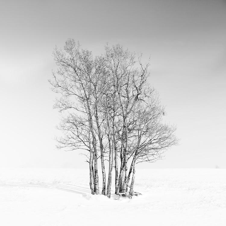 Trees huddled together in a winter landscape.