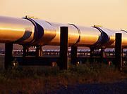 Early morning light illuminating the Trans Alaska Pipeline with Vertical Support Member (VSMs), view just north of Pump Station 3, Alyeska Pipeline Service Company, Alaska.