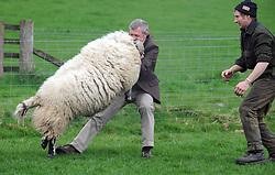 Willie Rennie, Kelty, 21-4-2017<br /> <br /> Willie Rennie with Stuart McDougall of Mill House handling a sheep<br /> <br /> (c) David Wardle | Edinburgh Elite media