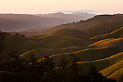 Spring evening on Bolinas Ridge, Mt. Tamalpais, in Marin County, California