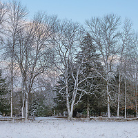 After a storm a soft evening light illuninates trees covered in snow.