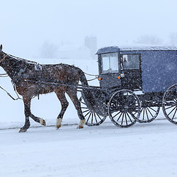 Bird-in-Hand, PA - March 5, 2015: An Amish buggy travels through snowy conditions on the road during a wintry storm in rural Lancaster County.