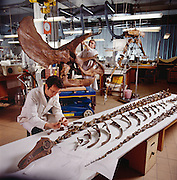 British Museum paleontologists in London revamp their dinosaur collection.